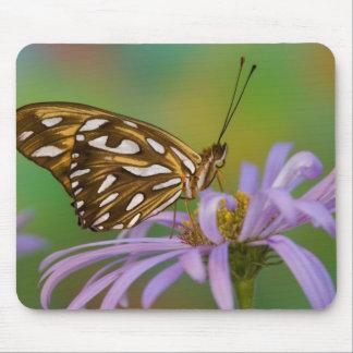 Sammamish, Washington. Tropical Butterflies 40 Mousepad