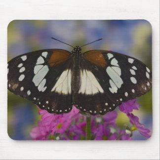 Sammamish, Washington. Tropical Butterflies 41 Mouse Pad