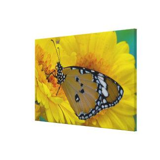 Sammamish, Washington. Tropical Butterflies 42 Canvas Prints