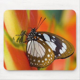 Sammamish, Washington. Tropical Butterflies 42 Mouse Pad
