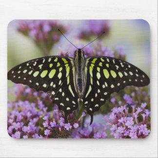 Sammamish, Washington. Tropical Butterflies 43 Mousepad
