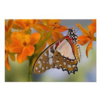 Sammamish, Washington. Tropical Butterflies 44 Art Photo
