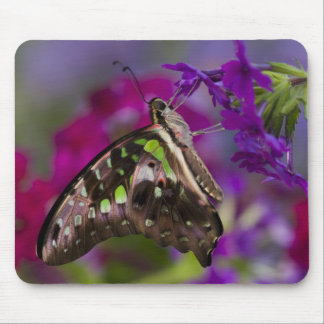 Sammamish, Washington. Tropical Butterflies 45 Mouse Pad