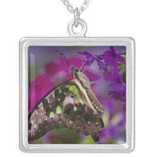 Sammamish, Washington. Tropical Butterflies 45 Square Pendant Necklace