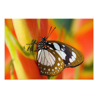 Sammamish, Washington. Tropical Butterflies 46 Photo