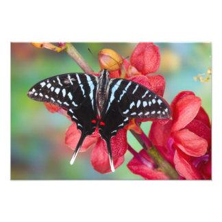 Sammamish, Washington. Tropical Butterflies 46 Photo Art
