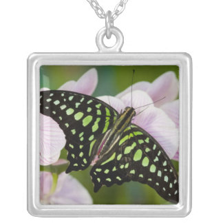 Sammamish, Washington. Tropical Butterflies 46 Square Pendant Necklace