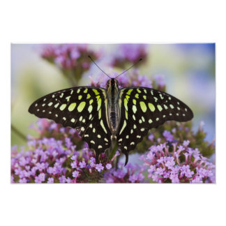 Sammamish, Washington. Tropical Butterflies 47 Photograph