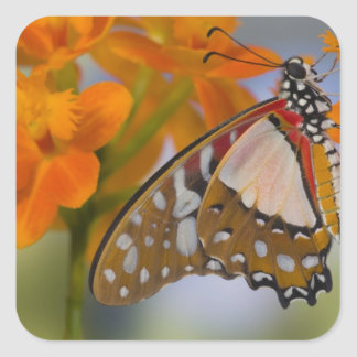 Sammamish, Washington. Tropical Butterflies 47 Square Sticker