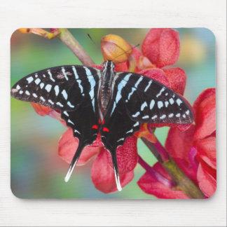Sammamish, Washington. Tropical Butterflies 48 Mousepad
