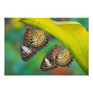 Sammamish, Washington. Tropical Butterflies 49 Photo Print