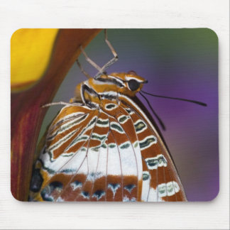 Sammamish, Washington. Tropical Butterflies 4 Mouse Pad