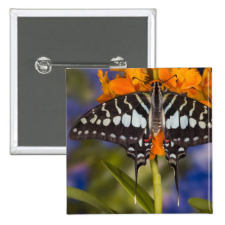 Sammamish, Washington. Tropical Butterflies 50 15 Cm Square Badge