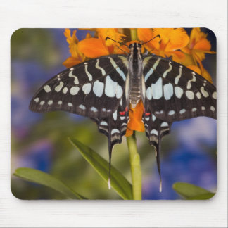 Sammamish, Washington. Tropical Butterflies 50 Mouse Pad