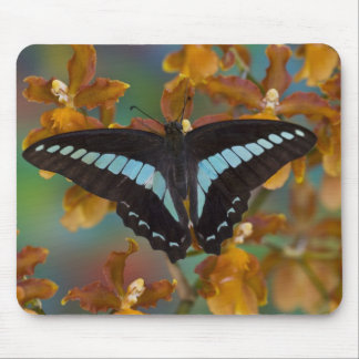 Sammamish, Washington. Tropical Butterflies 52 Mouse Pad