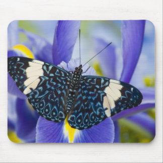Sammamish Washington Tropical Butterflies 56 Mousepad