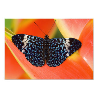 Sammamish, Washington. Tropical Butterflies 57 Photo Art