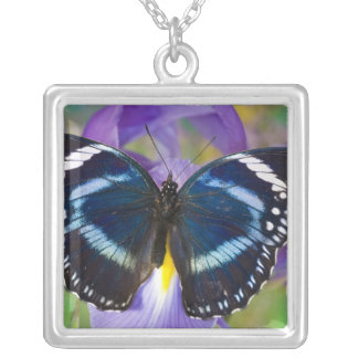 Sammamish, Washington. Tropical Butterflies 57 Square Pendant Necklace