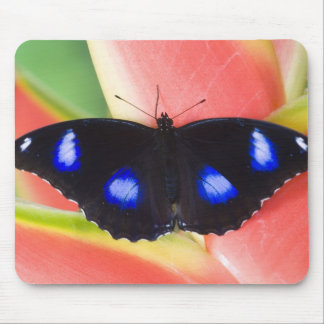 Sammamish Washington Tropical Butterflies 58 Mousepads