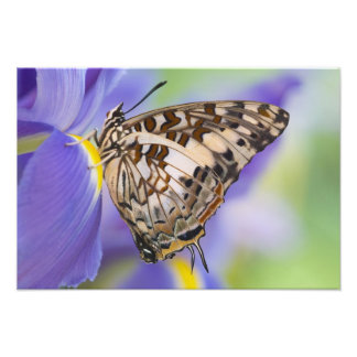Sammamish, Washington. Tropical Butterflies 59 Photo