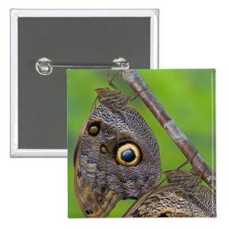 Sammamish, Washington. Tropical Butterflies 5 15 Cm Square Badge