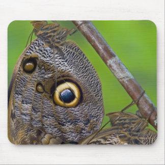 Sammamish, Washington. Tropical Butterflies 5 Mouse Pad