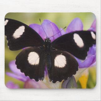 Sammamish, Washington. Tropical Butterflies 60 Mouse Pad