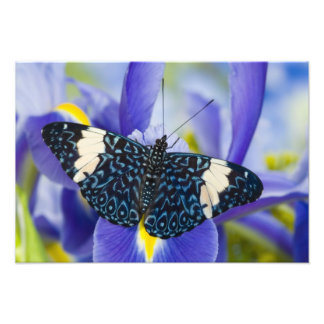 Sammamish, Washington. Tropical Butterflies 60 Photo Art