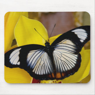 Sammamish, Washington. Tropical Butterflies 62 Mouse Pad