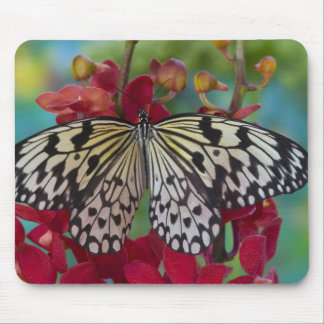Sammamish, Washington. Tropical Butterflies 63 Mouse Pad
