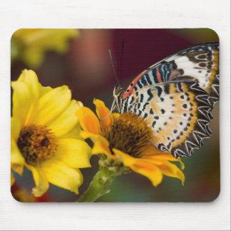 Sammamish, Washington. Tropical Butterflies 66 Mousepad