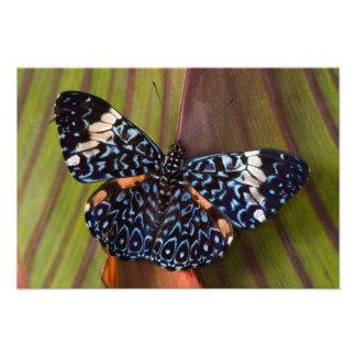 Sammamish, Washington. Tropical Butterflies 66 Photo Print