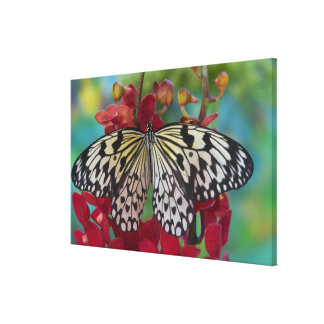 Sammamish, Washington. Tropical Butterflies 67 Canvas Print