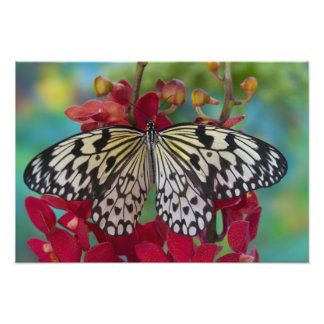 Sammamish, Washington. Tropical Butterflies 67 Photo Art