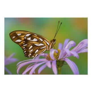 Sammamish, Washington. Tropical Butterflies 67 Photographic Print
