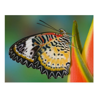 Sammamish, Washington. Tropical Butterflies 67 Postcard