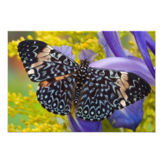 Sammamish, Washington. Tropical Butterflies 68 Photo Print