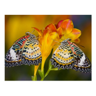 Sammamish, Washington. Tropical Butterflies 68 Postcard