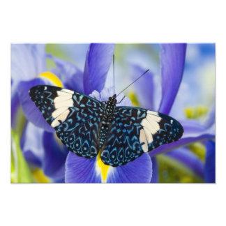 Sammamish, Washington. Tropical Butterflies 69 Photograph