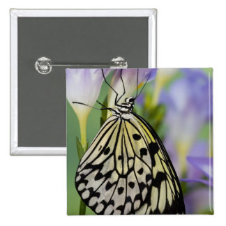 Sammamish, Washington. Tropical Butterflies 6 15 Cm Square Badge