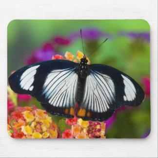 Sammamish Washington Tropical Butterflies 70 Mousepads
