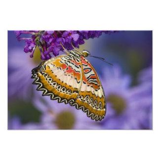 Sammamish, Washington. Tropical Butterflies 7 Photograph