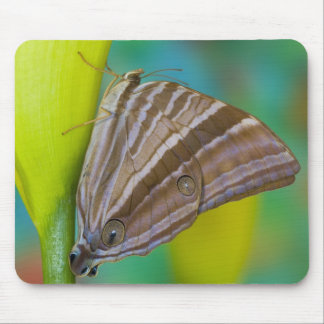 Sammamish, Washington. Tropical Butterflies 8 Mouse Pad