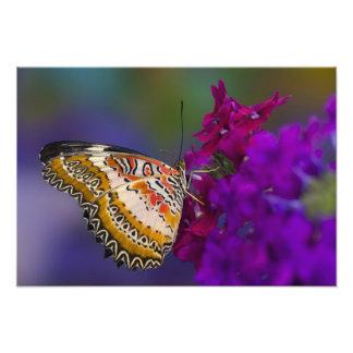 Sammamish, Washington. Tropical Butterflies 8 Photo Print