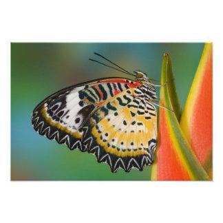 Sammamish, Washington. Tropical Butterflies 9 Photographic Print