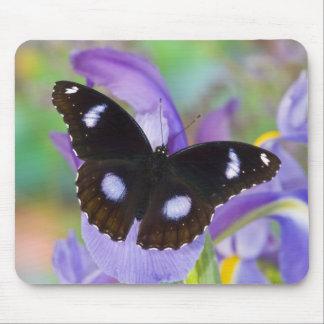 Sammamish Washington Tropical Butterflies Mouse Pad