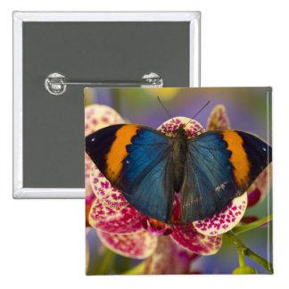 Sammamish Washington Tropical Butterfly 11 15 Cm Square Badge