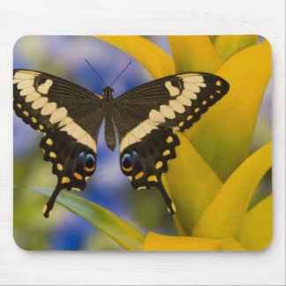 Sammamish, Washington Tropical Butterfly 11 Mouse Pad