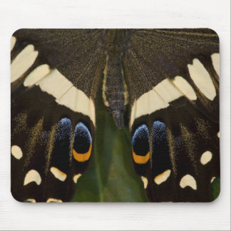 Sammamish, Washington Tropical Butterfly 12 Mouse Pad