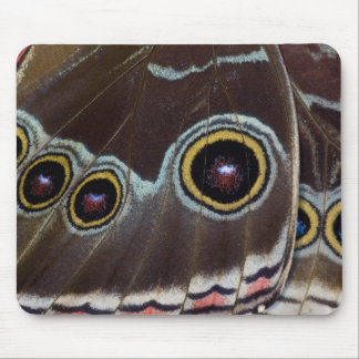 Sammamish Washington Tropical Butterfly 12 Mouse Pad